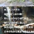 2018・09・22ひろし爺1840の生涯学習~メダカの水槽とスイレン鉢Windows:Movie&Photo!
