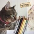 色鉛筆イラスト・猫