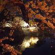 彦根城  夜桜