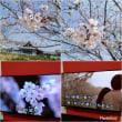 ■桜で偲ぶとき■