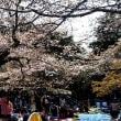 代々木公園でお花見会