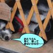 お父さん♪早く帰って来ないかなぁ~沖縄の貸別荘犬