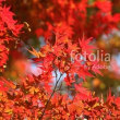 fotolia「紅葉の彩り」 加治丘陵の紅葉です