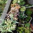 寒い日が続きましたが今日だけは晴れ間が、この間を活用して庭の密集部分の間引きを