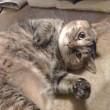 安野家の猫は、我が家の一階に自由自在に侵入する。二階に私と私の猫がいてもだ。どうして、そん何、ふてぶてしくなれるのだ?
