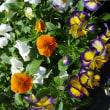 街角をじゃらん春に咲く花