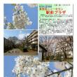花巡り 「椿・山茶花-25」 駅前プラザ 東鷲宮ニュータウン