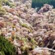世界遺産の吉野山で・・・・・・・・・・・・・・の記事です。