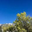 雲ひとつない青い空
