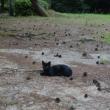 黒猫と松ぼっくり