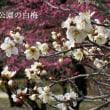 1609話 「 立春 」 2/4・月曜(曇・晴)
