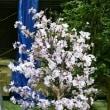 オーダーメイド 桜の人工観葉植物
