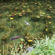 うだつの上がる町とモネの池