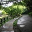 新緑鮮やかな鎌倉;鯉のぼりが泳ぎ始めた鎌倉中央公園
