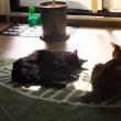 小さい大人猫な見た目になっていた!生後5か月の猫