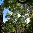大興善寺からp11、新緑のつつじ寺(契り園)ラスト