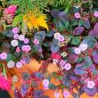 季節の寄せ植え