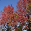 澄みきった秋の空。