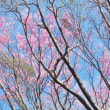 4/22 工石山アケボノツツジ2