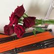ランチと薔薇と…