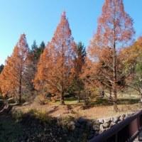 渓流公園の紅葉