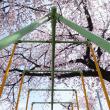 桜小学校の桜