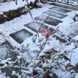 今朝も冷たい雪☃️