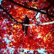 『ヒヨドリも』 紅葉狩り