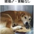 ゴン太郎日記 【12月9日】