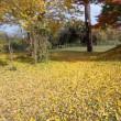 黄色のジュウタン