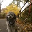 サーカス犬