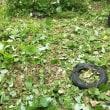 三小の木の伐採&雑草刈り作業