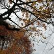 散りゆく風景 落ち葉のじゅうたん