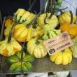 北海道産 ハロウィン用かぼちゃ ギャラクシーオブスター