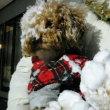 山沿い秋保は雪それでもあさんぽです(*^^*)