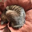 「猫の日」