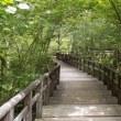 赤沢森林保養林