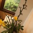 盛花 直立 苔桜 水仙 石楠花