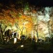 京都八瀬の紅葉、ライトアップ