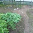 熱湯で庭のコケ退治!