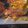 紅葉の御岳渓谷 3