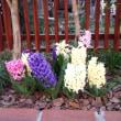 花とチコさん・最近のチコ様子