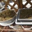 種蒔き、球根・芋球植え