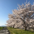 今年の桜はあっとゆう間。