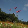 里山ガーデン 秋の大花壇