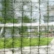 ルコウソウでグリーンカーテン
