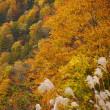 小谷村の山の中 紅葉が素敵でした