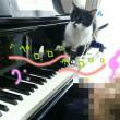 キッちゃん おピアノを弾く