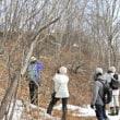 2019年2月15日(金)苫小牧豊川町近所の自然散歩