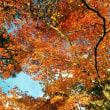 京大に、紅葉狩り~